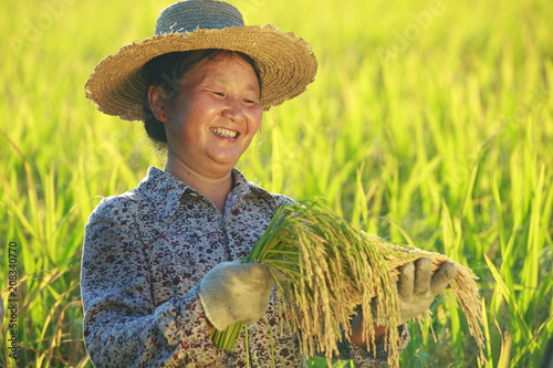 happy asian female farmer holding golden rice smile in the rice paddy Poster