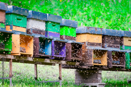 Photo Swarm of bees flying around the beehive