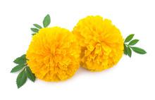Yellow Marigold Flower, Tagete...