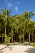 Coconut palm trees on a white sandy beach of a tropical island in Asia
