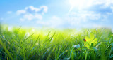 Fototapeta Na sufit - Spring summer background with fresh green grass and ladybug against a blue sky in nature, close-up macro. Panoramic view, copy space.