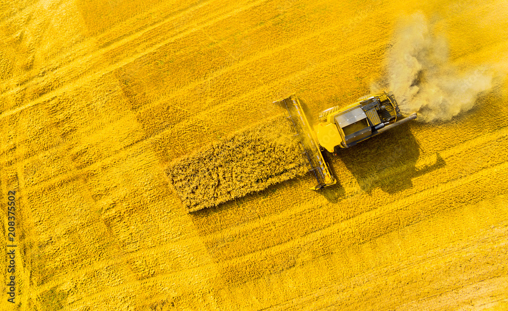 Fototapeta Aerial view of combine harvester. Harvest of rapeseed field. Industrial background on agricultural theme. Biofuel production from above. Agriculture and environment in European Union.