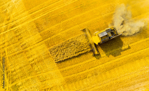 Fototapeta Aerial view of combine harvester. Harvest of rapeseed field. Industrial background on agricultural theme. Biofuel production from above. Agriculture and environment in European Union.  obraz