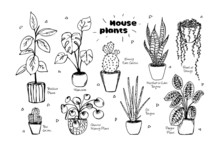 Hand Drawn Vector Set Of House Plants In Pots Isolated On White Background