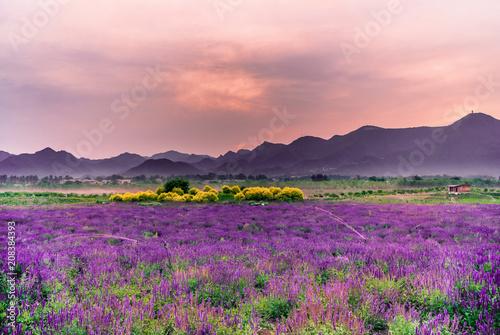 Foto op Canvas Lichtroze Lavender flowers