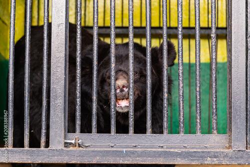 Fényképezés  Bear in captivity in a zoo behind bars