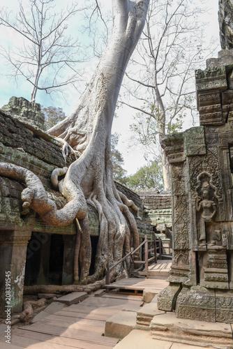 Fotobehang Bedehuis Ta Prohm temple at Angkor Wat complex, Siem Reap, Cambodia