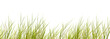 Leinwandbild Motiv freigestellte schilfgräser