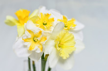 White Daffodils Closeup