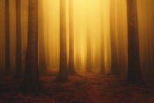 Foggy Fantasy Dreamy Forest Wi...