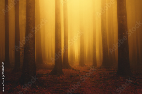 foggy fantasy dreamy forest with sunshine at morning in autumn