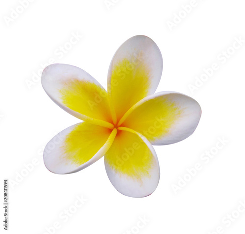 Foto op Canvas Frangipani frangimani flower isolated on white background