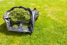 Grass Cuttings In A Black Plas...