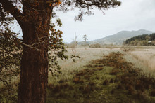 Green Lands Of Reserved Park