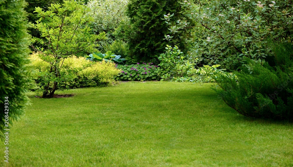 Fototapety, obrazy: Green lawn surrounded by beautiful plants in a well-kept garden.