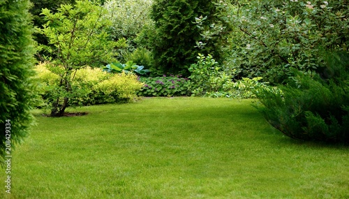 Poster de jardin Arbre Green lawn surrounded by beautiful plants in a well-kept garden.