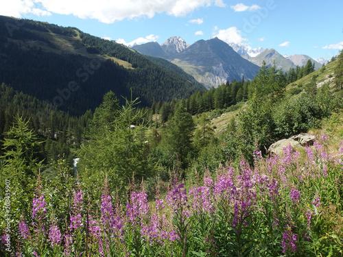 Fotografie, Obraz Włochy, Alpy - trasa wzdłuż wodospadów Rutor, widok na góry z różowymi kwiatami