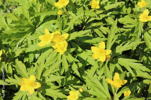 Beautiful Little Yellow Flowers And Green Leaves Growing On The