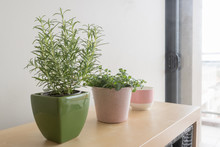 Rosemary Plant In Green Container And Oregano Plant In Pink Container With Pink And White Cup On Shelf In Living Room (selective Focus)
