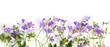 Floral banner, border. Creative flat layout pattern of wildflowers,  top view.