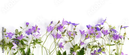 Fotomural Floral banner, border
