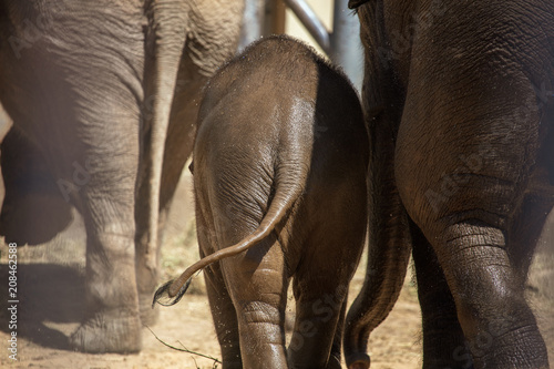 The legs of elephants in the park Canvas Print