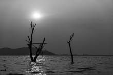 Scenic Of Dead Tree In Reservo...