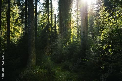 Foto auf Gartenposter Wald Dark virgin forest. Light coming through the trees on the trail