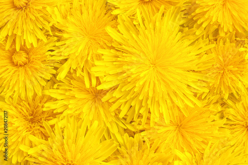 yellow dandelions close-up, background, texture #208472117