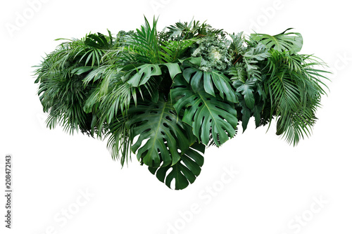 Fotobehang Planten Tropical leaves foliage plant jungle bush floral arrangement nature backdrop isolated on white background, clipping path included.