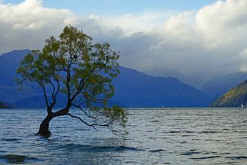Panel Szklany Rzeki i Jeziora der berühmteste Baum in Neuseeland in Wanaka