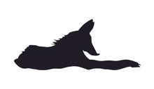 Fox Lies, Silhouette, Vector