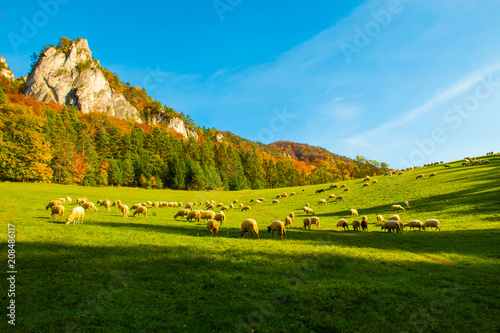Staande foto Herfst Mountains in the Sulov rocks Nature Reserves with sheeps in the autumn, Slovakia