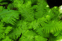Fern In The Forest Against The...