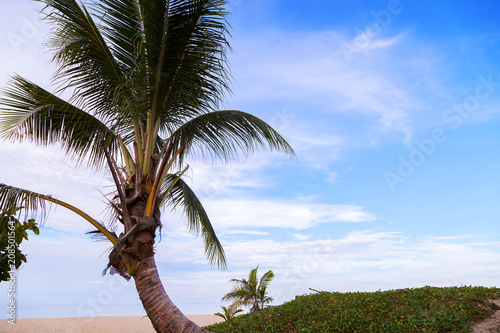 Fotobehang Bomen Sandy tropical beach with coconut palm tree frame beautiful beach of andaman sea scenery background in phuket thailand,concept summer holiday background.