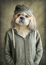 Cute Dog Shih Tzu Portrait, We...