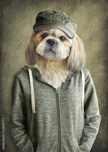 Cute dog shih tzu portrait, wearing human clothes, on vintage background. Hipster dog.