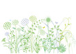 Gräser, Kräutern, Pflanzen, Illustration