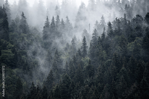 Staande foto Grijs Misty landscape with fir forest in hipster vintage retro style