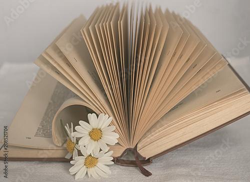 Fotografie, Obraz  Libro abierto con margaritas