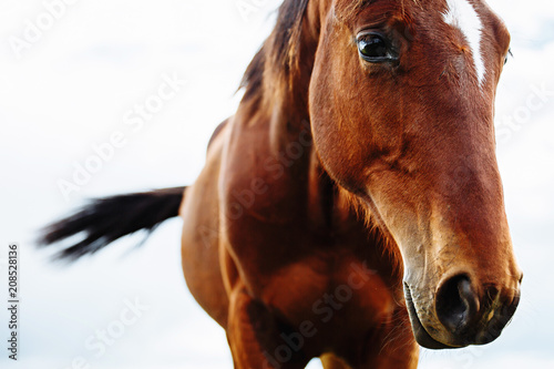 Keuken foto achterwand Paarden Portrait of beautiful red horse in summer