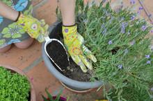 Woman Adding Fertilizing Soil ...