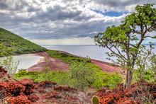 Red Rocky Coastline Of Rabida Island In The Galapagos