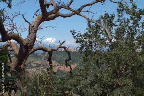 Foto op Aluminium Grijze traf. regione Marche,Italia,borgo,paese,paesaggio,veduta
