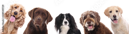 Photographie Group of dogs
