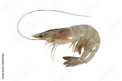 Fresh shrimp isolated on white background, clipping path