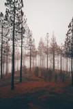Herbst Wald im Nebel orange düster und Mystisch Märchenwald - 208557709