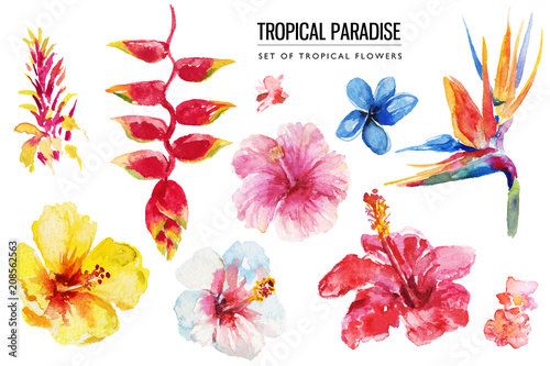 Photo Watercolor tropical floral illustration set with colorful hibiscus & flowers for wedding stationary, greetings, wallpapers, fashion, backgrounds, textures, DIY, wrappers, postcards, logo, etc