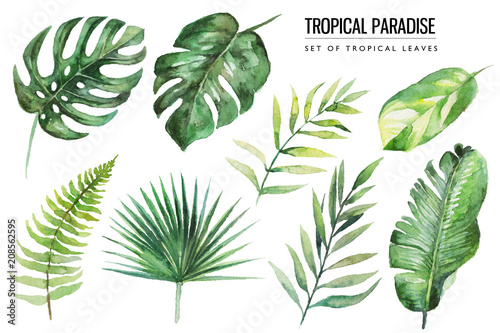 Photo Watercolor tropical floral illustration set with green leaves for wedding stationary, greetings, wallpapers, fashion, backgrounds, textures, DIY, wrappers, postcards, logo, etc