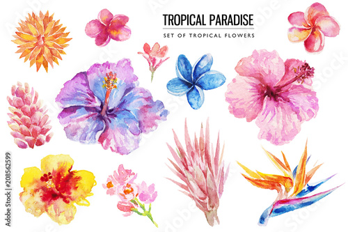 Watercolor tropical floral illustration set with bright hibiscus & flowers for wedding stationary, greetings, wallpapers, fashion, backgrounds, textures, DIY, wrappers, postcards, logo, etc Canvas Print